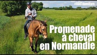 Promenade à cheval en Normandie dans l'Eure