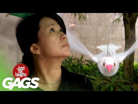 Disney Birds Turn Into Reality In Asian Pranks!