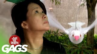 Birds Attacking People - Just For Laughs Gags
