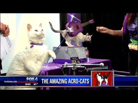 The Amazing Acro Cats Youtube