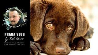 Уничтожить всех бездомных собак! Praha Vlog 244