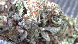 1st US High Times Cannabis Cup Denver Colorado! DAY 2 -CRTV