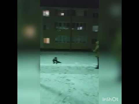 Раз морозною зимой...