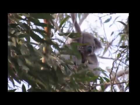 Australia - Travel to Adelaide and Kangaroo Island