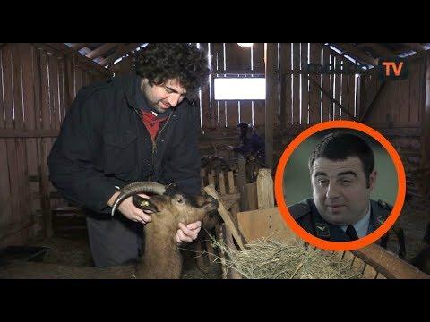 Branko Janković glumac i kozar: Zdravije je među kozama!  Mondo TV