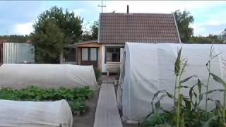 видео Сверчок в доме: благополучие или бессонные ночи?