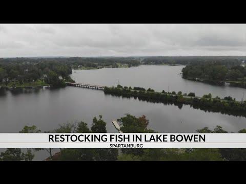 Restocking Fish In Lake Bowen