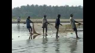 Record Fish catch for ethnic fishermen at Indian state of Goa