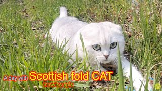2021 A Scottish fold CAT I met while driving / relaxing with a Cat/4K