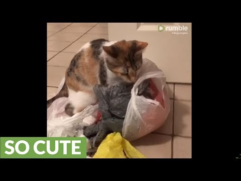 Kitten learns how to reduce, reuse and recycle