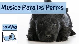 Musica para relajar a tu perro estresado, Musicoterapia para perros