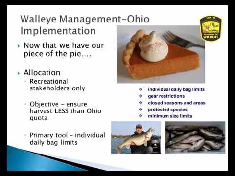 Managing Lake Erie Walleye And Perch Populations