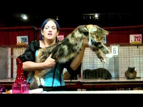 TICA Cat Show Final in Reno, NV October 29-31, 2010