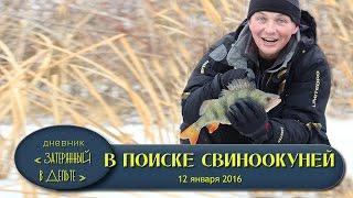 Астрахань. Зимняя рыбалка на Волге. Где ловить окуня видео.
