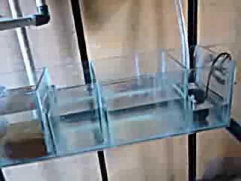 Acuario con filtro sump y overflow youtube for Filtro acuario marino