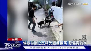 快點拉開!2比特犬闖進民宅 咬傷搜救犬|TVBS新聞