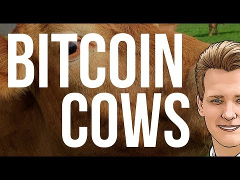 Bitcoin Cash Cows - Programmer expains