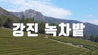 강진 녹차밭 겨울 풍경(드…