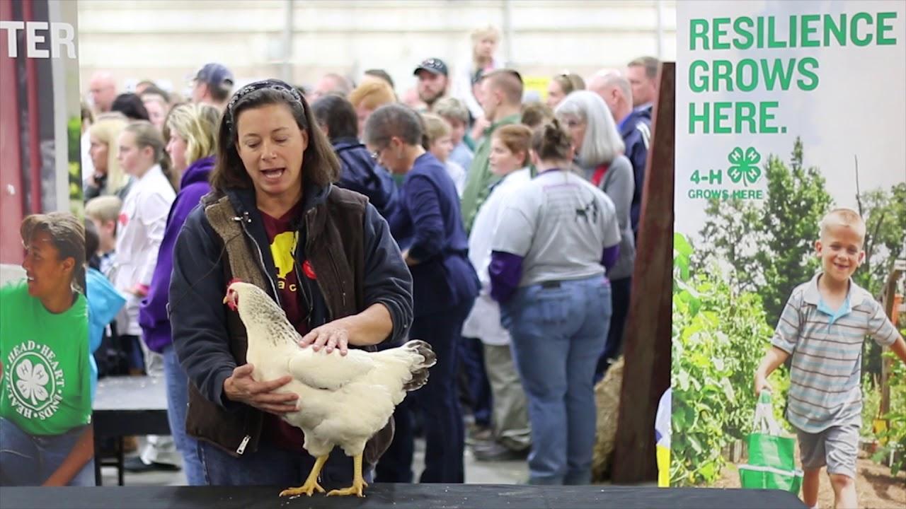 Download Delaware (Large Fowl)
