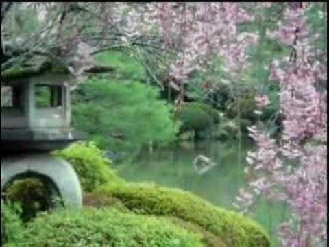 Hoa anh dao, Japan-1