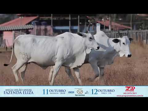 LOTE 193