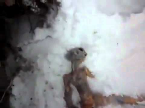 CUERPO DE EXTRATERRESTRE MUERTO ENCONTRADO EN SIBERIA ( Dead alien found in UFO hotspot in Russia)