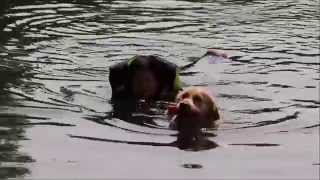 Vepe Harjoitus Water Rescue Dog Training 16072015