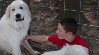 Hang 10 Episode 18: Fletcher and our Great Pyrenees Livestock Guardian Dogs