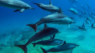8 hours - Hawaii Dolphins Underwater Relaxing Music - RELAX, SLEEP, MEDITATE | Great Escapes