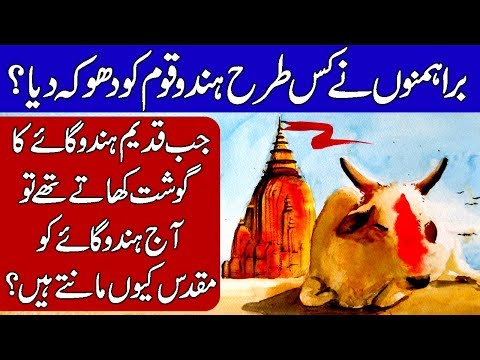 Story of Cows in ancient India. Hindi & Urdu