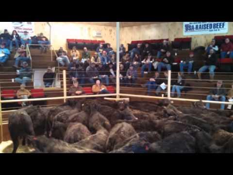 Cattle Market Summary 3-20-2015