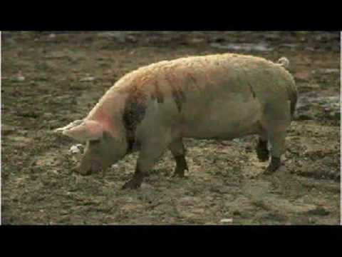 LOS ANIMALES DE LA GRANJA.wmv Travel Video