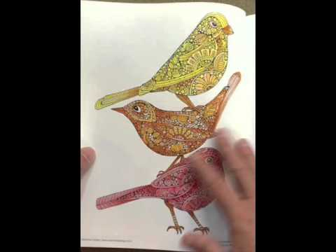 Creative Coloring Birds Art Activity Pages To Relax And Enjoy Flip Through