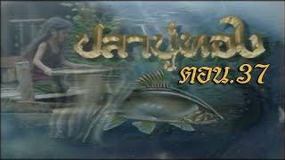 ปลาบู่ทอง ตอน 37