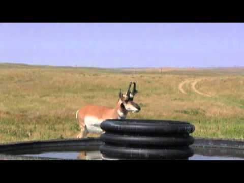 Antelope Up Close and Personal! Wyoming Pronghorn Hunting