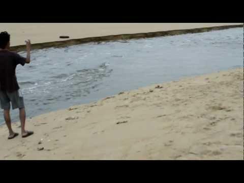 Adyar River joining with Bay of Bengal Chennai Gopalakrishnan