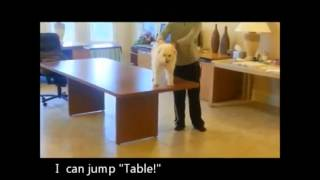 CLIP Funny Dog Hot Videos (Animal Funny Video 2013) CLIP