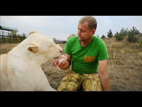 Это видео УНИКАЛЬНО ! Львица и человек ПОЛНАЯ ГАРМОНИЯ !!!