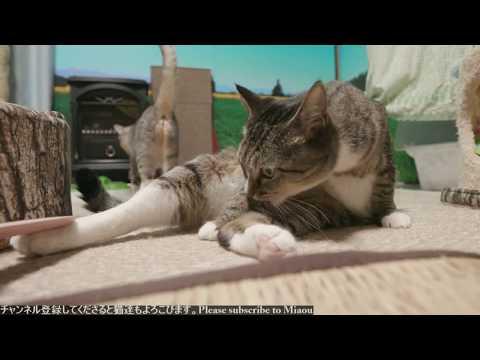 2018.8.11 猫日記   Cats & Kittens room 【Miaou みゃう】