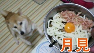 生の卵白に含まれるアビジンというタンパク質は、犬にとって良くない成分だそうなのであげるときは卵黄のみ与えております。うどんは塩分を...
