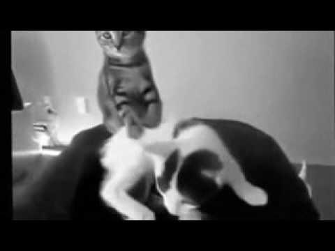 Funny Cat Videos   1 minute Watch it   low