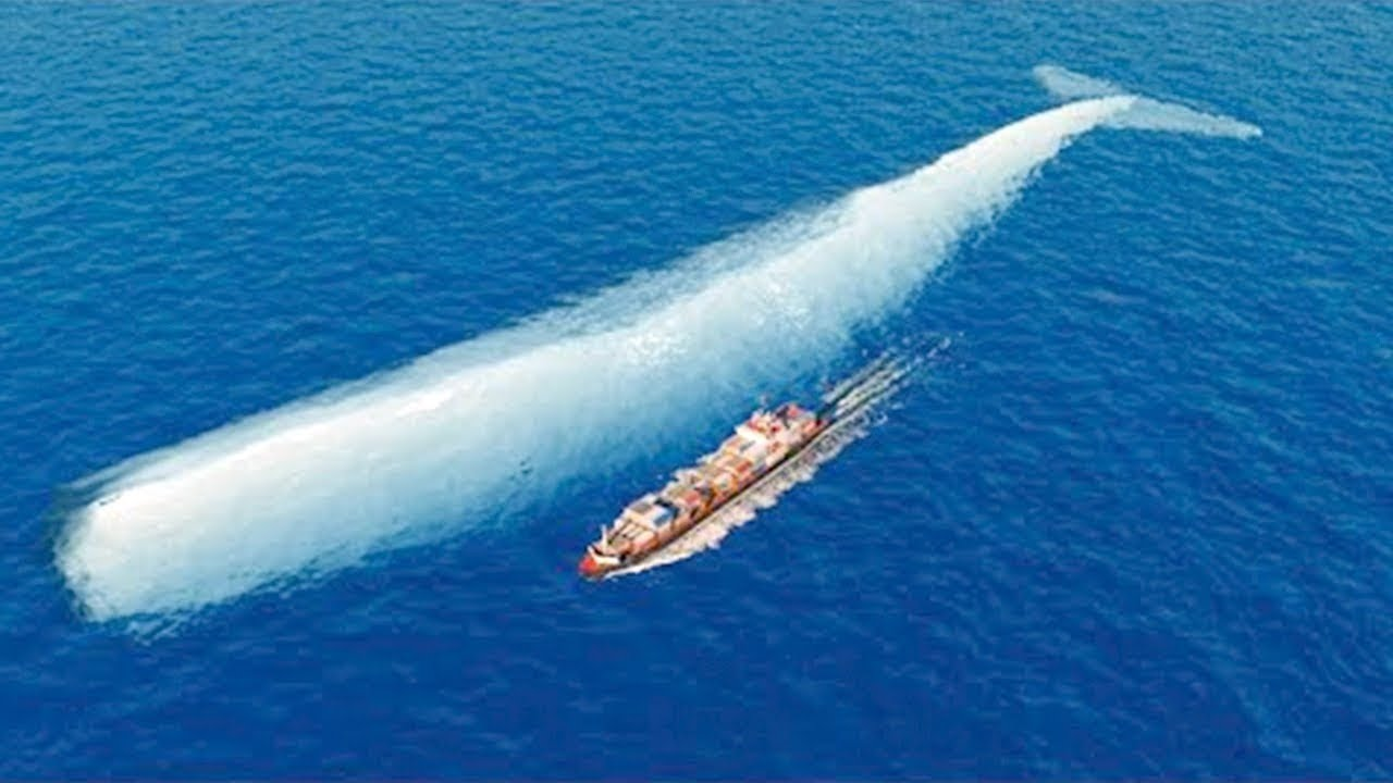 Download This Is What Biggest Whale In The World Can Do