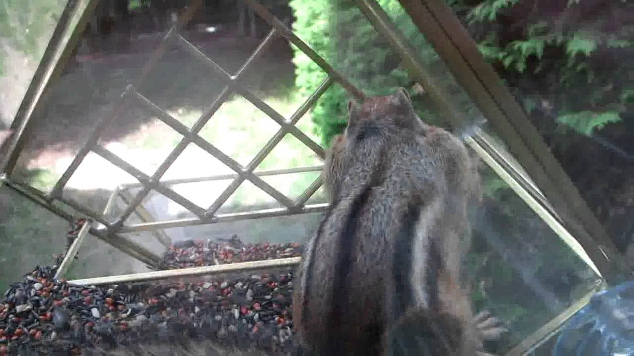 how to keep chipmunks out of bird feeders