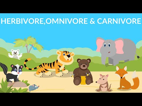 Herbivores | Carnivores | Omnivores | Types Of Animals