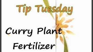 Curry Leaf Plant (Kadi Patta) Fertilizer