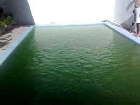 Tilapia lambaris e carpa no cativeiro caixa d agua 10 for Pintado de piscinas
