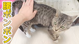 cute cat patted happily