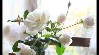 11月に入ってから、晴れて暖かい日が随分ありました 晩秋から初冬に咲く...