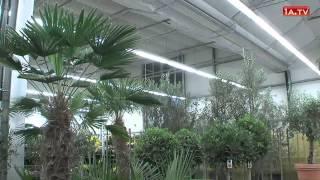 1A.TV - Zürcher Blumenbörse, Wangen bei Dübendorf (Video)