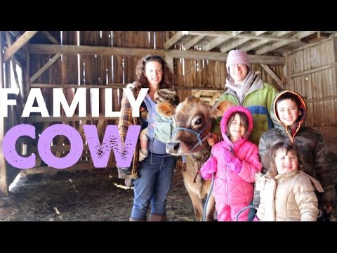 Family Cow - Should You Get One For Your Homestead?